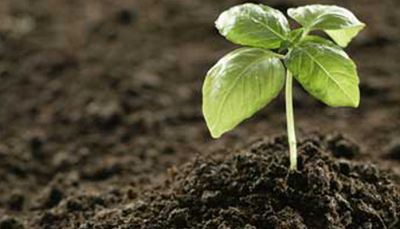 biofertilizer market by IMARC Group